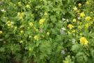 Travní směs - nektarodárný biopás - balení 1 kg